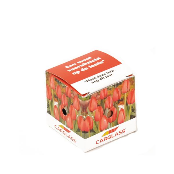 Mini flower bulb box