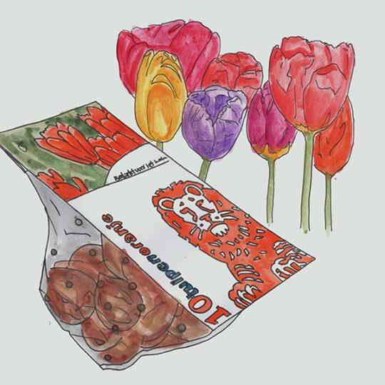 zakje bloembollen met fullcolour bloemenkaart