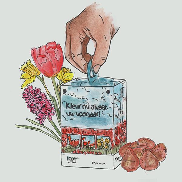 flower bulb box own design