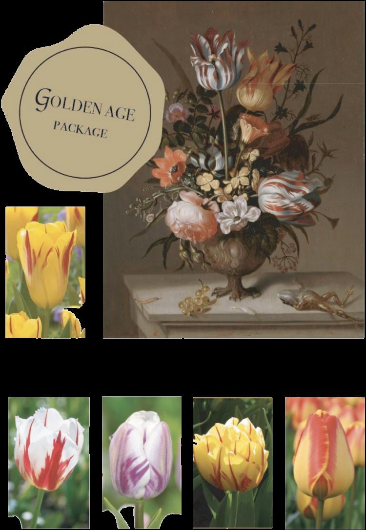 goudeneeuw bloembollenpakket