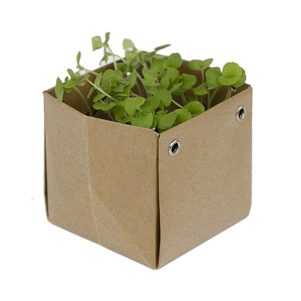 kitchen herbs envelope