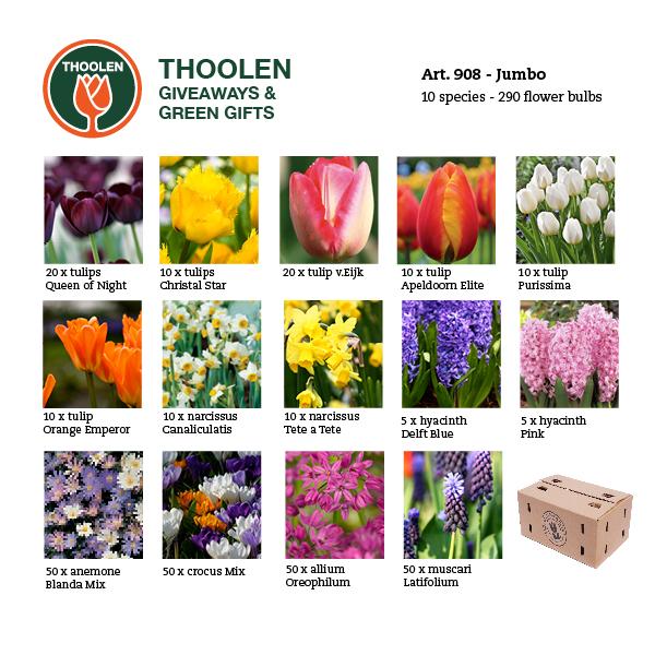 908-jumbo-bloembollenpakket